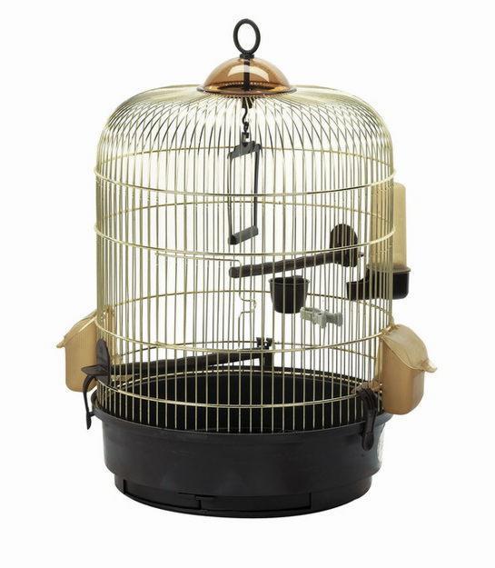 аллергия на попугая фото