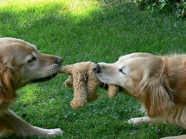 dog-toys_big