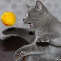 www.Eylence.AZ_cats_01_part_08